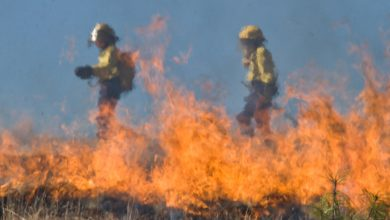 firefighters tackling a wildfire